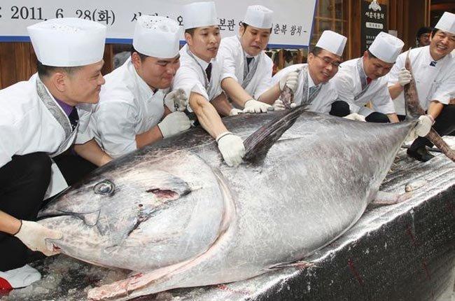 Ngon hơn nếu biết cách chế biến cá ngừ